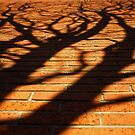 Tree shadow on wall by Esther  Moliné