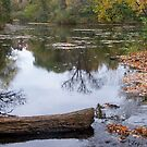 Fall reflections by leesm19