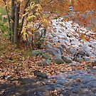 Rocky autumn bank by leesm19