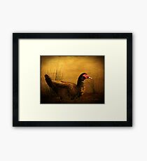 Maurice the Muscovy Framed Print