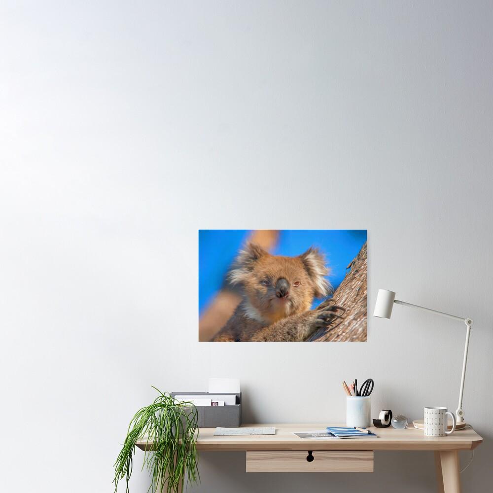 Cute Koala (digital painting) Poster