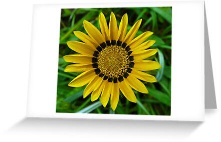 Symmetry In Yellow by stevealder