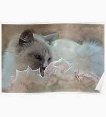 """As Gentle as a Kitten ..."" Poster"