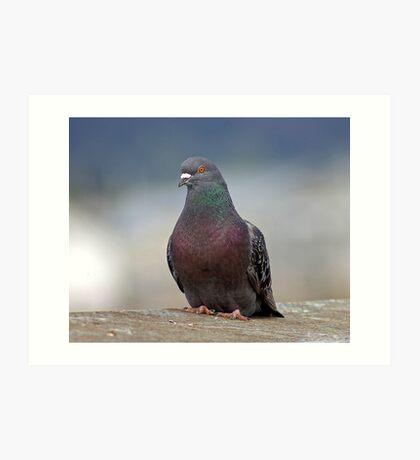 pigeon.... james pigeon Art Print