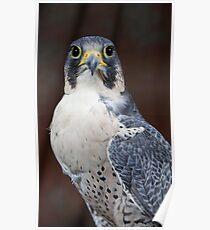 Bird of prey 1 Poster