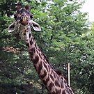Giraffe by endomental Artistry