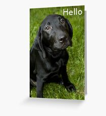 Hello - black lab puppy Greeting Card