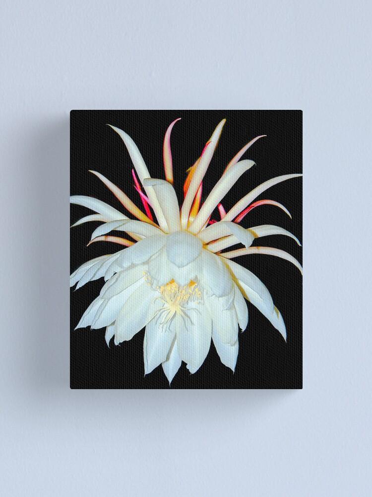 Alternate view of Night Blooming Cereus Canvas Print