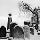 Mount Jerome cemetery in the snow by Esther  Moliné