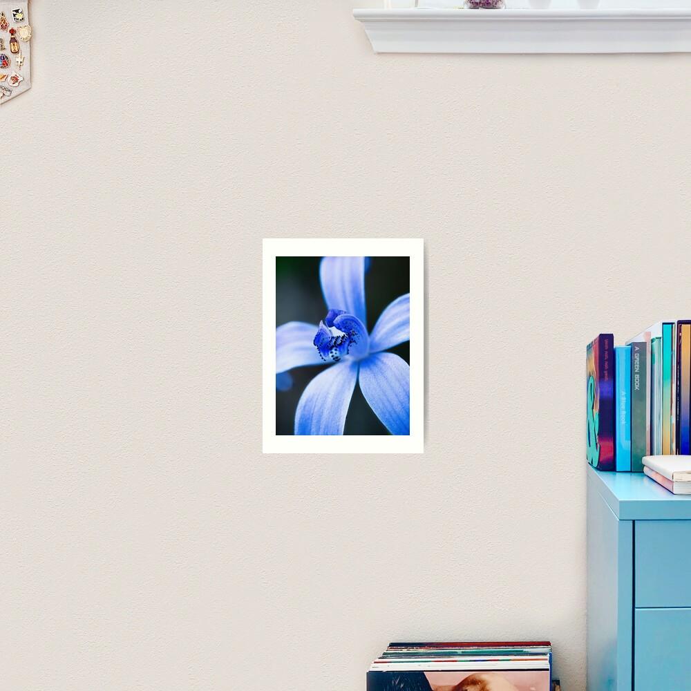Silky Blue Orchid Art Print