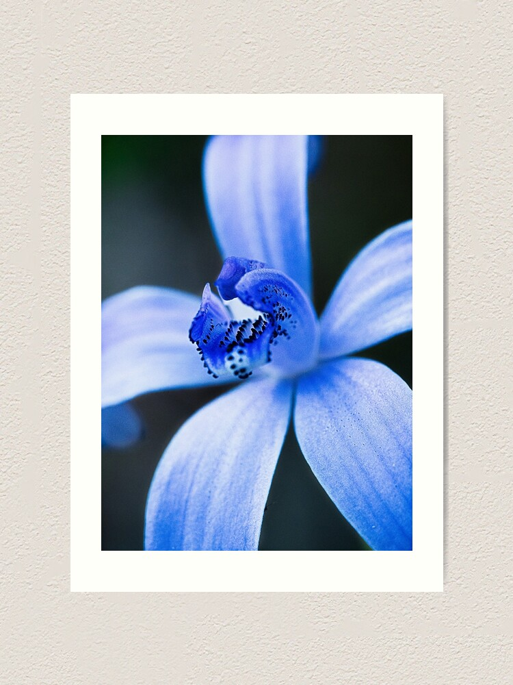 Alternate view of Silky Blue Orchid Art Print