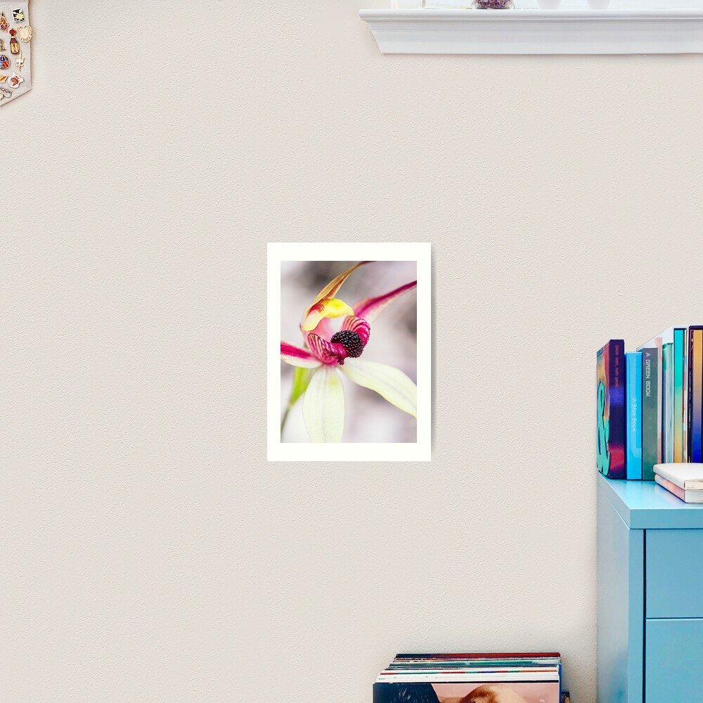 Leaping Spider Orchid Art Print