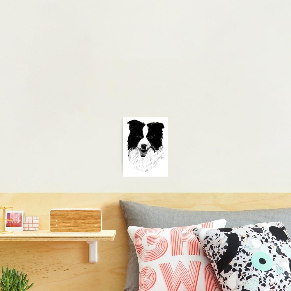 Border Collie - Wall Art Photographic Print