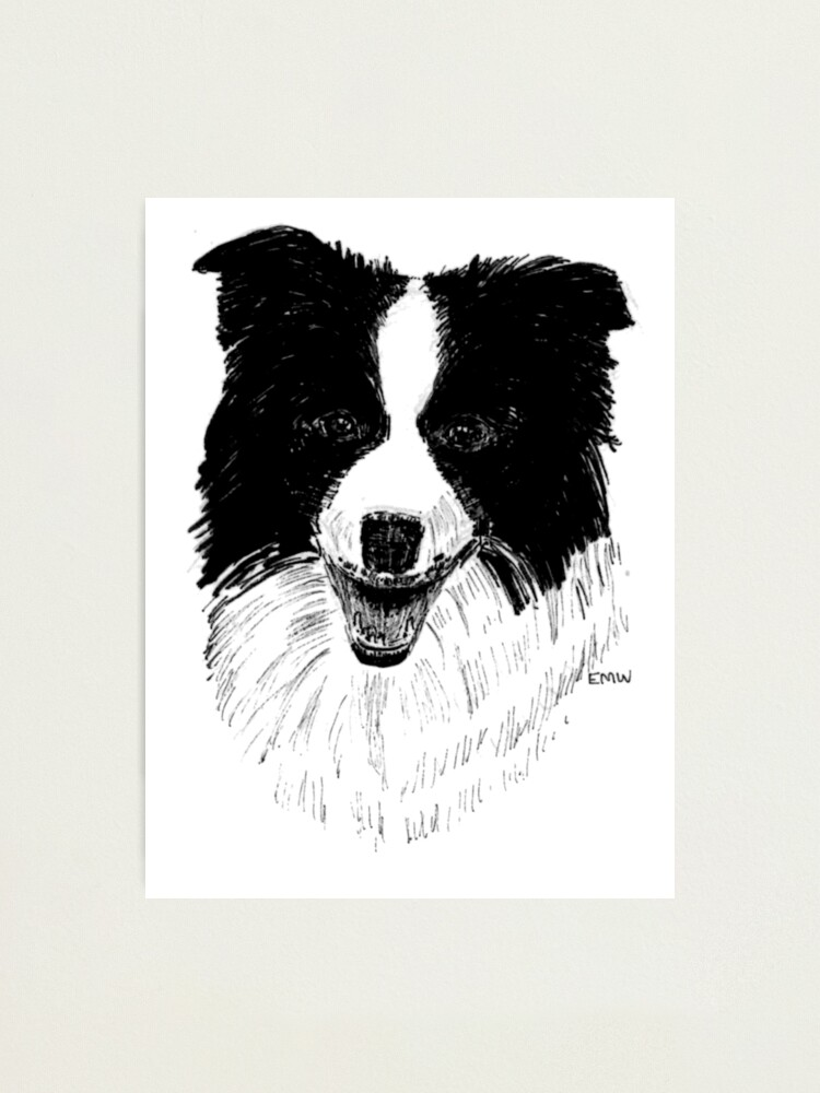 Alternate view of Border Collie - Wall Art Photographic Print