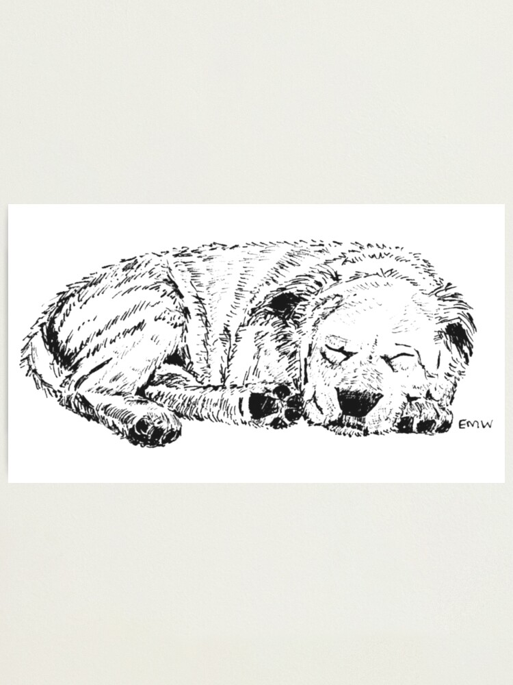Alternate view of Let Sleeping Dogs Lie - Wall Art Photographic Print
