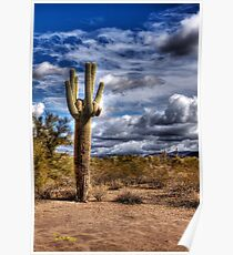 One Tall Cactus Poster