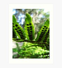 Fern frond with seed pods Art Print