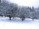 """Drive-by Shooting #10: Irwin Snow orchard by Christine """"Xine"""" Segalas"""