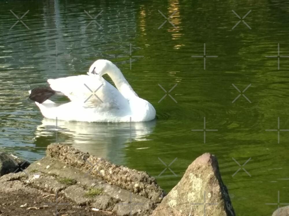 Merch #46 -- Swan - Shot 4 by Naean Howlett-Foster