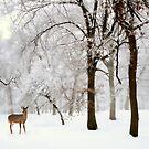 Winter's Breath by Jessica Jenney