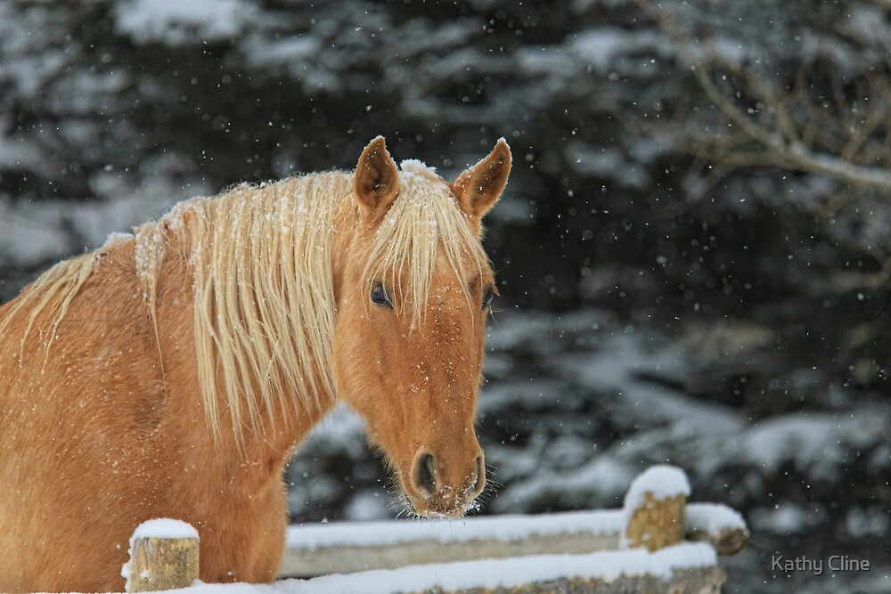 Snowy Equine by Kathy Cline
