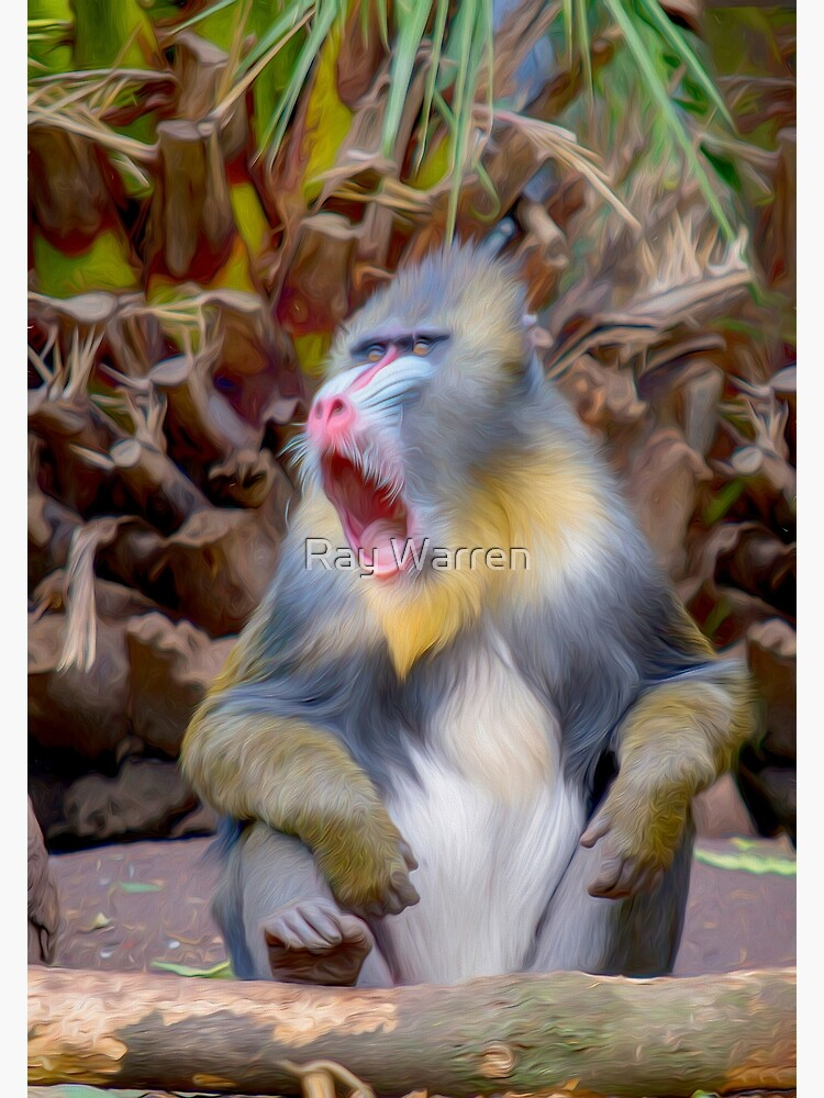 Magnificent Mandrill IV  (digital painting) by RayW