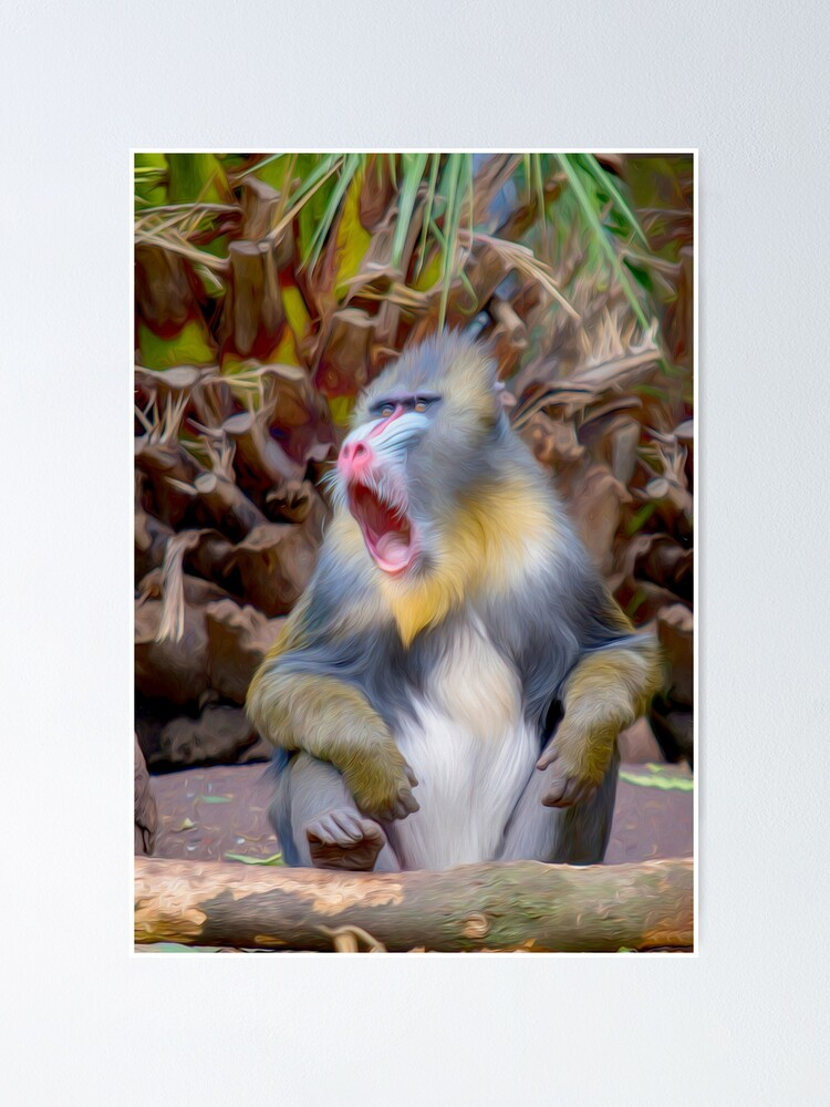 Alternate view of Magnificent Mandrill IV  (digital painting) Poster