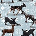 The Christmas Peruvian Hairless Dog by Elspeth Rose