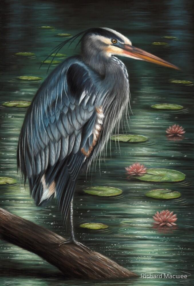 Portrait of a Great Blue Heron by Richard Macwee