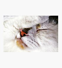 Fur Ball Photographic Print