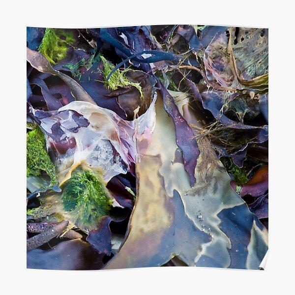 seaweed Poster