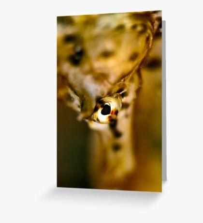 Seahorse Portrait Greeting Card