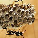 Yellow Jackets At Work by Doty