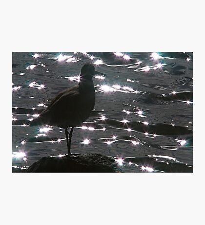 Willett Silhouette Photographic Print