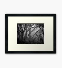 Scary Trees- Morialta Framed Print