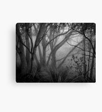 Scary Trees- Morialta Canvas Print