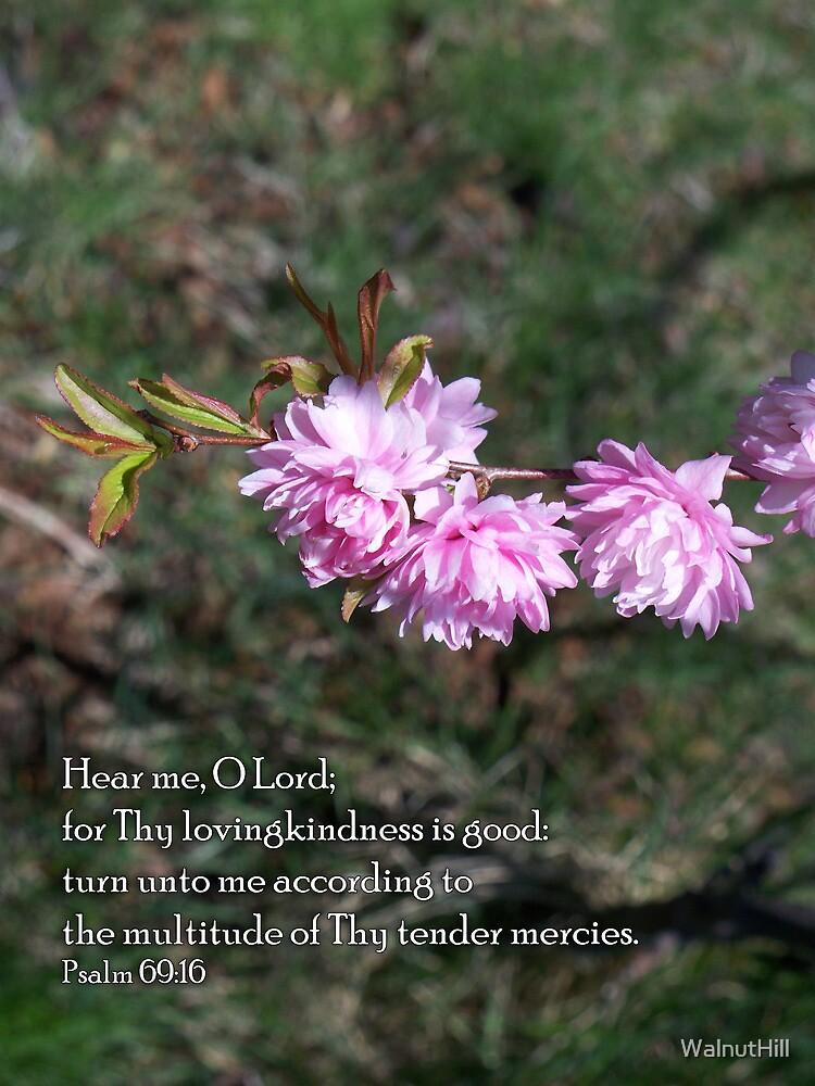 Thy tender mercies by WalnutHill