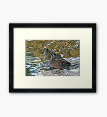 Preening Ducks Framed Print