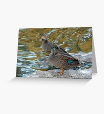 Preening Ducks Greeting Card