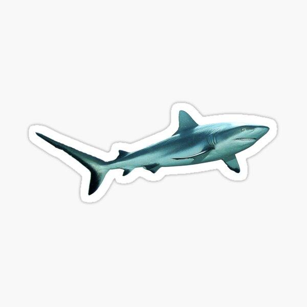 Riffhai   Ein Hai-Light    Sticker