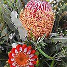 Native Australian Flora by Kayleigh Walmsley