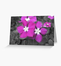 Solo color Greeting Card