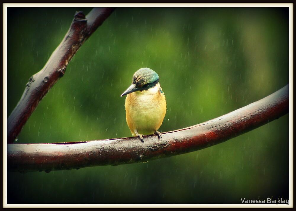 Sacred Kingfisher in the Rain by Vanessa Barklay