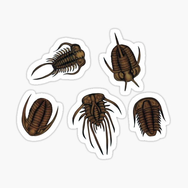 Trilobites - Marine Fossil Pattern Sticker
