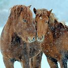 Winter affection by Alan Mattison