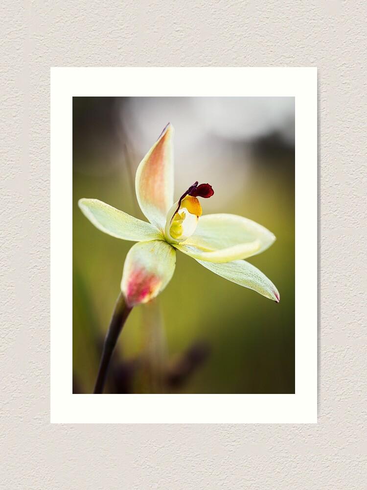 Alternate view of Lemon Scented Sun Orchid Art Print