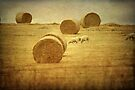 ~ Hay Day ~ by Lynda Heins
