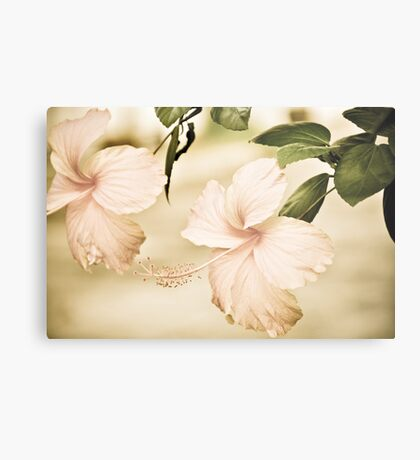 The Delicate Twin:Sold May17,2013: Explore Feb 22, 2011: Got Featured Work Metal Print
