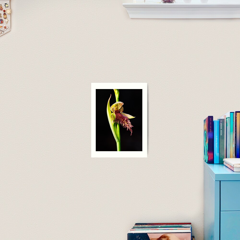 Wandoo Beard Orchid Art Print