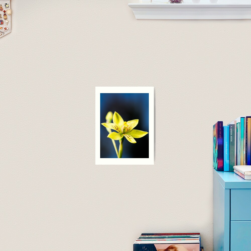 Custard Orchid Art Print